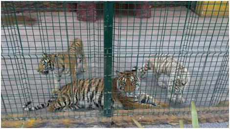 animales Jerécuaro5.jpg